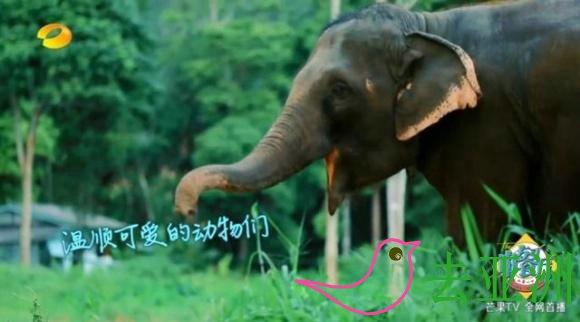 既然叫做象岛,肯定也有大象咯