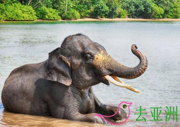 龙目岛大象公园