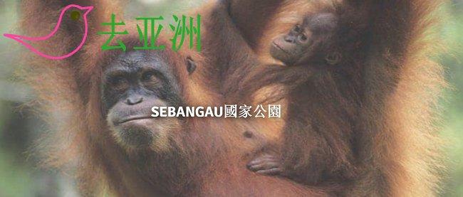 Sebangau国家公园