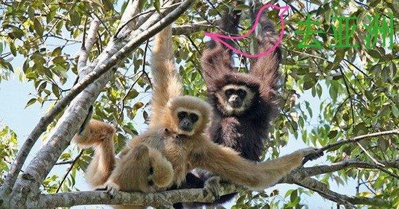高域猿生态保护区