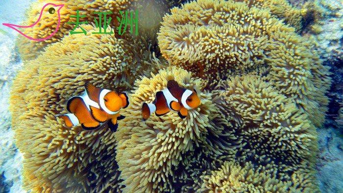 珊瑚花园 Coral Garden