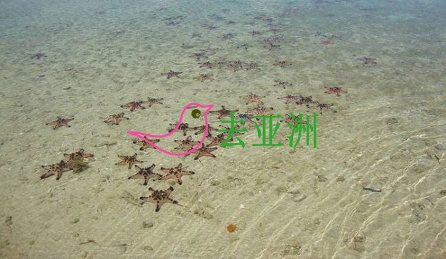 海星岛 Starfish Island