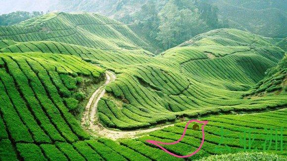 马来西亚真正最大的高原度假胜地金马伦高原(Cameron Highlands)