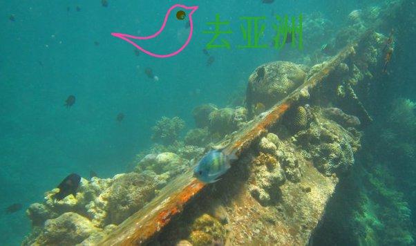 沉船架 Skeleton wreck
