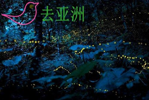 """马来西亚雪兰莪州有一条天然""""萤光河"""",怀着"""