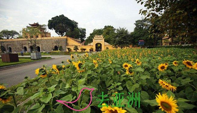河内升龙皇城的向日葵花