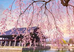 雅高酒店 韩国提早预订,享低至七折优惠!
