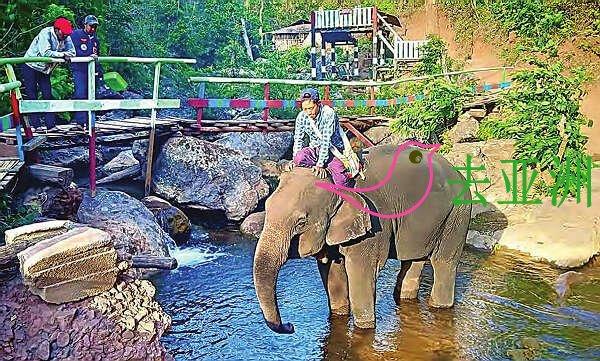 掸邦南部的掸佑玛大象营