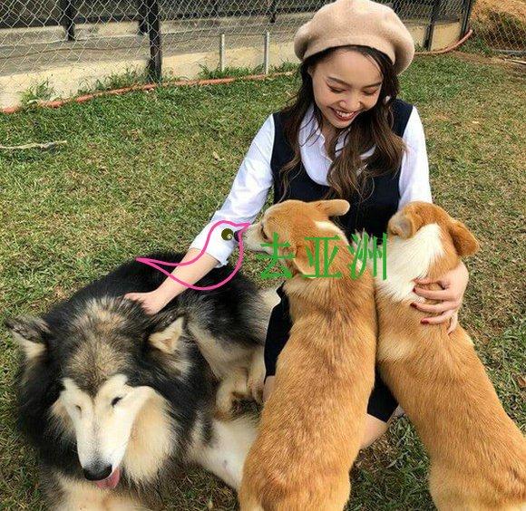 """大勒山城的宠犬农庄,与逾40头不同种类的宠犬"""""""