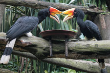 淡布隆国家森林公园Ul