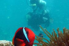 长滩岛潜水Diving