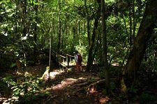 丛林徒步Jungle Trekking